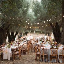 wedding dinner under olive trees